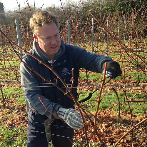 Andy the farm manager pruning